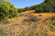 Namaqualand Escape Cycle Tours